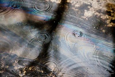 #38 Droplets in Oil