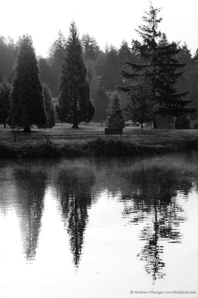 #313 - Morning Mist