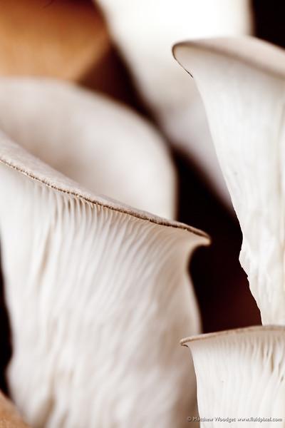 #159 - Fungi