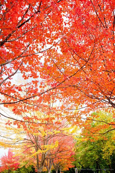 #294 - Fall into Colour