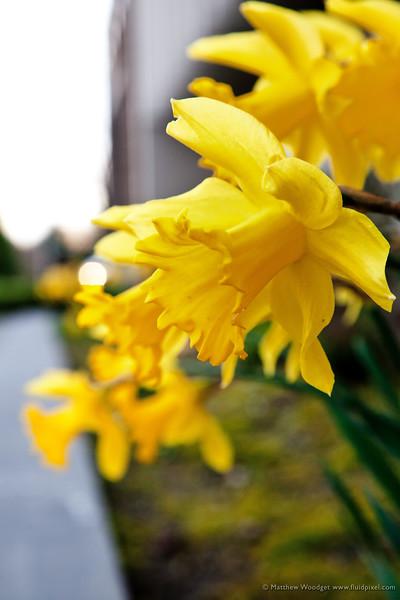 #81 Spring Regression