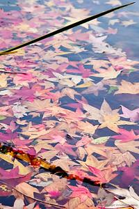 #317 - Liquid Leaves