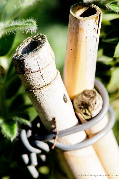 #157-Tiny Bamboo