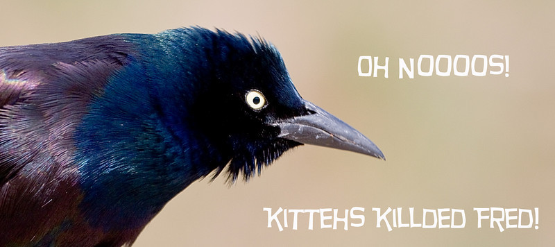 An earlier entry from another contestant featured cats with a grackle they killed.