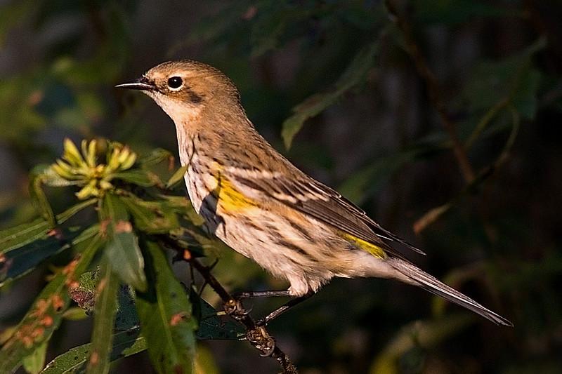 Small Marsh Bird<br /> harbinger of Easter.<br /> <br /> photography by ginger
