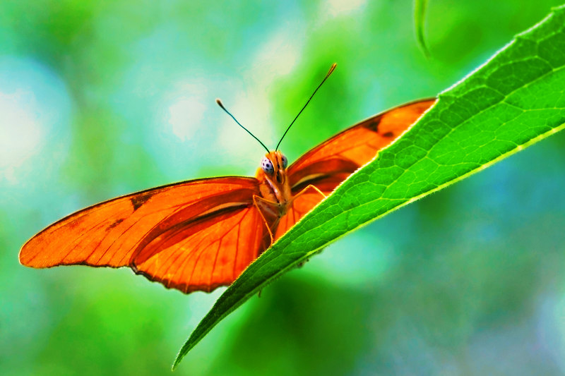 "To look into the eyes<br /> of a butterfly on a leaf<br /> is a dream unto perfection<br /> if only for a moment!<br /> <br /> ""Dance, dance, where ever <br /> you might be.  I am the lord <br /> of the dance said he""<br /> (a song I remember from church)"