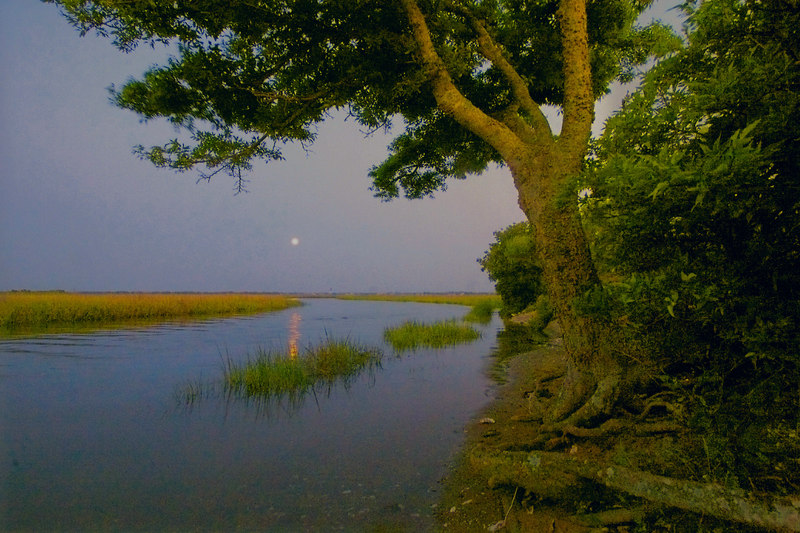 Full Moon Over Sullivan's Island<br /> June, 2006<br /> <br /> I sit there a lot and watch the dark come on!  I thought that was my tree until I saw it posted by another local photographer.  I still work it, I think it is my tree most.  ginger<br /> have a good day!