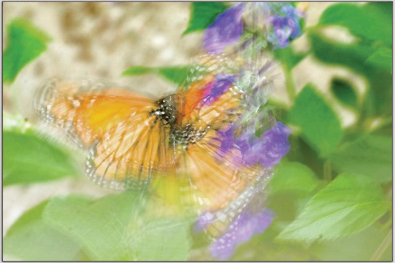 Waltz of the butterflies
