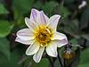 Bee, Bud, Blossom