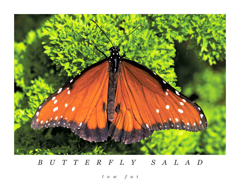 Butterfly Salad: low fat DIET<br /> 4/24/2006<br />  <br /> <br /> <br /> What butterflys are good for?<br />  <br /> They make you smile...........awe, you did, didn't you!<br />  <br /> The happy things of spring and summer here in the low country!<br />  <br /> What do you all think that butterflys are good for?<br />  <br /> They would give Merry Chapel lots to think and worry about!  Bless her heart.<br />  <br /> Personally, I can't see that the B'rer Rabbit movie could ever have been made<br />  <br /> without butterflys.<br />  <br /> They stretch your mind and your vocabulary!  Play the game..........<br />  <br /> What would you do with a butterfly?<br />  <br /> (besides smile at it while your blood pressure went down, your seratonin went up.)<br />  <br /> Would you stick pins in their middle and attach them to boards for study, <br />  <br /> or would they be for your impromptu dance, in reality or in your mind.<br />  <br /> Butterflys are Cool Beans!<br />  <br /> ginger<br />  <br /> 4/26/2006