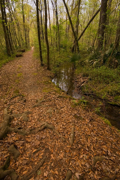 Path by the side of a stream<br /> in the woods.  Leaves under<br /> foot from the fall of the<br /> seasons.  Green in the trees<br /> for the spring of the year.<br /> <br /> I love the new growth of green,<br /> such a pretty and fleeting shade.<br /> <br /> <br /> In the foreground are roots from<br /> a large tree.  A beautiful place<br /> but I am a bit old for such <br /> foolishness, sad to say.  I made <br /> it back, barely.<br /> g