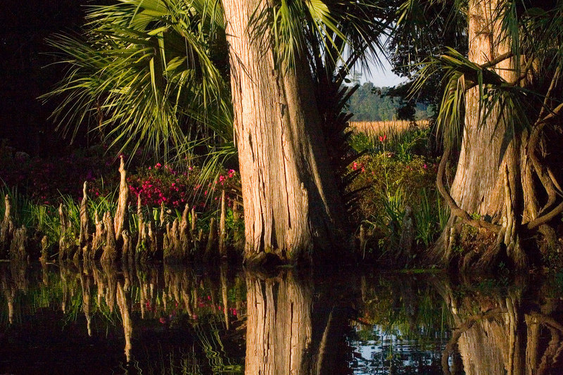 "If you didn't like the other one of my ""backyard"", what about this one?<br /> <br /> Magnolia Gardens sans bird: from reflections of the cypress trees and their knees to the marsh beyond, golden in that magical hour.  Red flowers fill out the ""picture"".<br /> <br /> ginger<br /> <br /> have a good day!<br /> <br /> <br /> Link to the orig daily for today.  The Lonely Goat that was passed over.  No wonder the kid is lonely.<br /> <br />  <a href=""http://upacreekPHOTOGRAPHY.smugmug.com/photos/99334868-L.jpg"">http://upacreekPHOTOGRAPHY.smugmug.com/photos/99334868-L.jpg</a>"