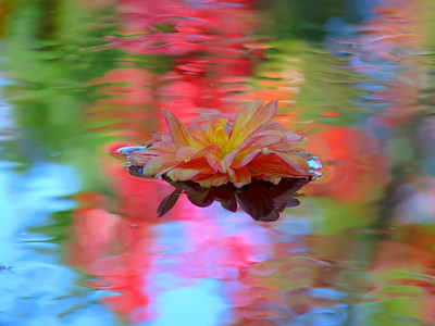 A little Monet to brighten your day!  Such fun I had yesterday at a swamp on the side of the road. The flower head is a fading dahlia from the Cotley Hill shoot. This is not processed either, just cropped. The brilliant color is the reflection of the surrounding swamp growth which is very colorful when shot this way. The one I'm working on for printing will be cleaned up.