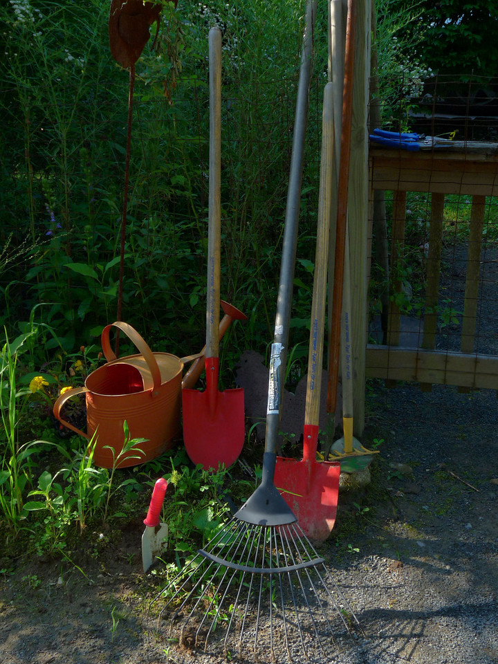 August 8, 2009<br /> Morning light in the garden.  And yes, I use kiddie tools. Not only are they better for my back but, they're much more colorful!