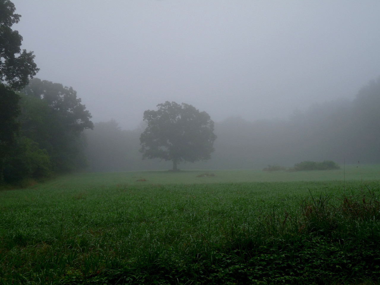 I went out this morning to take pictures of the sunrise but instead, my world was blanketed in fog. So I made lemonade.
