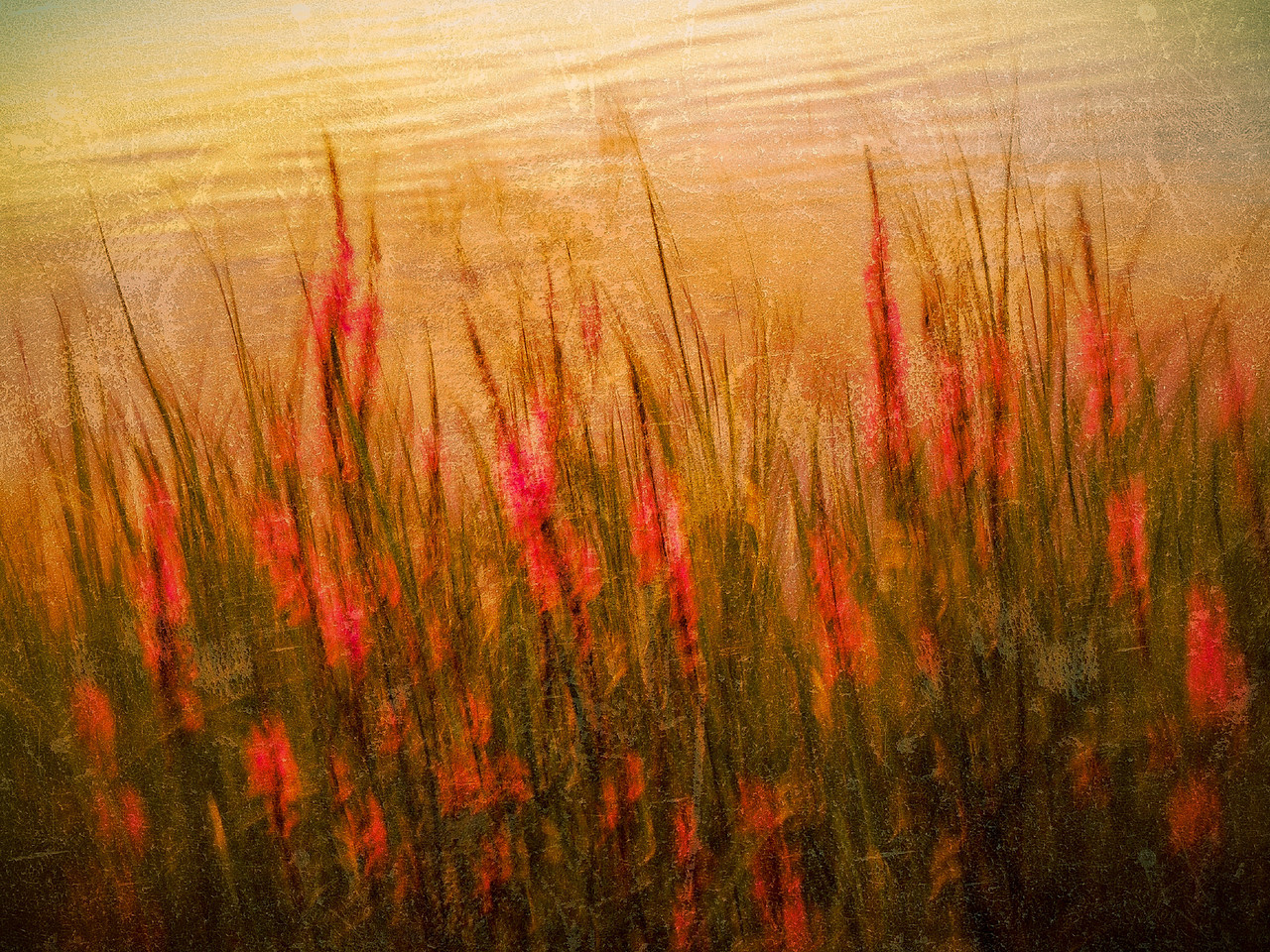 This was taken on the shore of Pocksha Pond at sunset. The very last rays of light and these weeds were illuminated so nicely. I took a few purposely blurred ones so I could try working this effect with it.