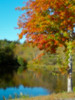 I love this time of year! It makes the simplest of things feel so indulgent, like driving down a road you've driven on hundreds of times. <br /> Vaughn Street<br /> Lakeville, Ma
