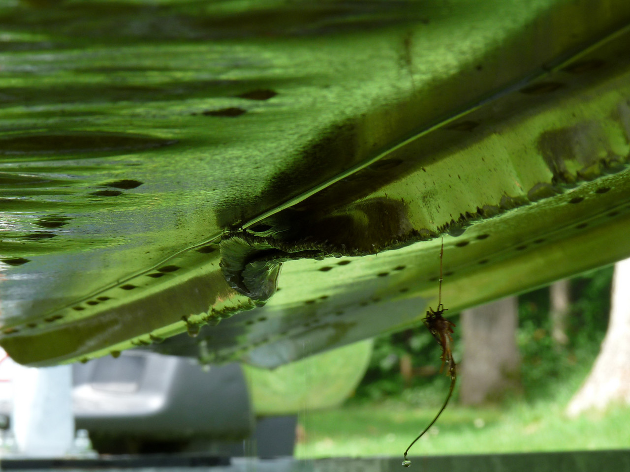 "Check this out!!!<br /> This is a boat. Kelly's boat. The bottom side of Kelly's boat with a 9 inch tear!  If you have a minute, it's a fun little story....<br /> <br /> Unfortunately, this isn't the only damage it suffered in a storm here this past Friday. As a result of the high winds, it came loose from the dock and spent the night slamming into the rocks on the shore line. (That's not the fun part...It gets better.) Luckily, it was still attached to the mooring so it never went too far. It must have been locked up on the rocks for a while. Friday, it seemed all was good as the propeller wasn't damaged. That night, Kelly and I decided, on a whim, to take it way out into the lake and watch the sunset. What a great idea and off  we went!  As we sat there, we noticed the bilge pump was running quite a bit more than normal although, the boat had no water in it. When alas  it was good and dark, we started back. We were giggling as we forgot to leave any outside lights on at the lake house and had to really pay attention to where we were going. All of a sudden, the motor died. Crap! out of gas!! Luckily we were relatively close to the dock so I paddled for all I was worth to get us properly set up, which was a feat as it was very windy and pretty choppy. We were saving the last little bit of gas to bring us cleanly to the dock. When she turned the engine over, it started and then died again right away. Oh dear! We were then being hurled towards the neighbor's dock, back end first! Panic! If only the neighbor was home, they could have helped. Nope. We were completely on our own and completely clueless. After bobbling around the neighbor's dock we finally got things under control enough to realize that all we had to do now was for one of us to manage actually getting out of the boat to walk next door (in the pitch dark) and retrieve the gas can. Good! Got it! Except then we couldn't figure out to get the gas into the boat. Meanwhile, the bilge was running and running. We couldn't leave the boat tied there as their dock took quite a hit from the storm itself and we doubted it could handle this big of a boat. I finally, after much procrastination and a ton of laughs, stripped down and jumped into the deep dark night water of Lake Assawompsett, swimming (hard I might add, with the chop) and pulling the boat back to it's proper place. That was it for that night. That was enough.<br />    It wasn't until the next day when Kelly's husband went into the water to inspect the boat that the gigantic hole was found. He bailed for a bit and all was well until yesterday, Sunday. Kelly and I met at the lake house for our walk only to find the boat well on it's way to sinking. We knew it was bad when we arrived there and there was a duck in it!   (here's a pic of Donald duck)... <a href=""http://hocusfocusd70.smugmug.com/gallery/8095536_9i72c#603641724_y79RD"">http://hocusfocusd70.smugmug.com/gallery/8095536_9i72c#603641724_y79RD</a> <br /> The bilge pump had quit and the boat was now filled with ankle deep water. We bailed and bailed. Finally, another neighbor (gotta love neighbors!) came and hauled the boat out of the water. Which brings me to this photo....This is what we found. It looks pretty bad. This is the same boat that we were out on when we came across the horse from my last daily. I guess we won't be doing that again any time too soon. Woe is me. Woer is Kelly! <br /> The boat was never out of gas. I t was out of something though. What ever it takes to keep a motor running when the insulating layer is taking on water must run out eventually. That's the long and short of it!"