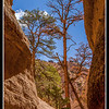 Trees in Tent Rocks