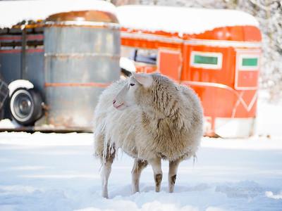 Winter at Sheepdog Junction