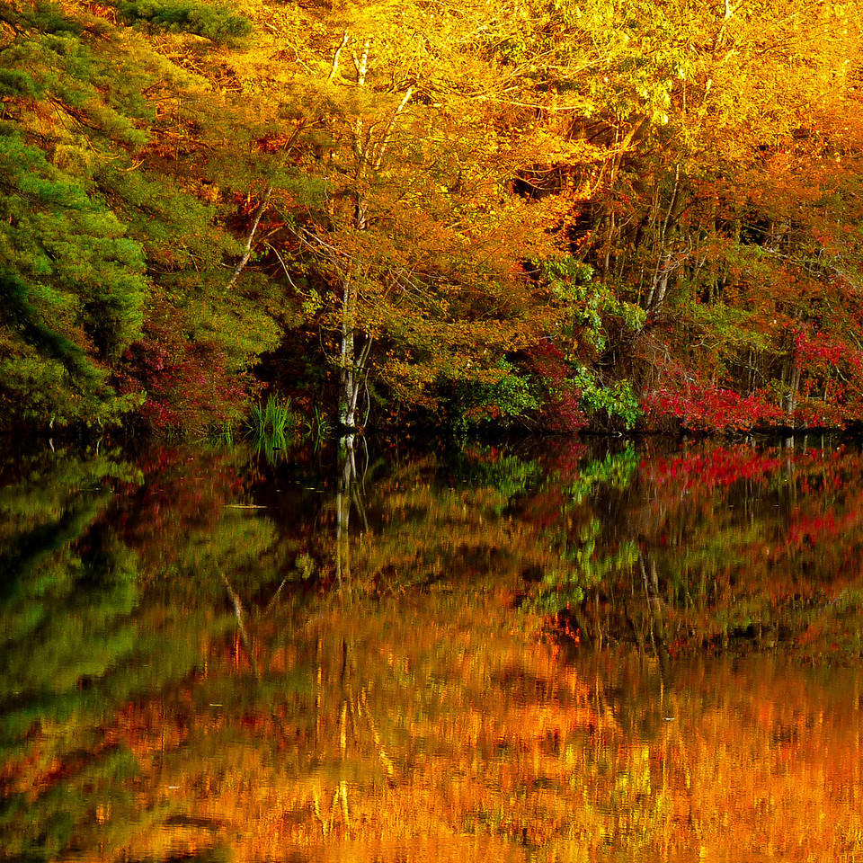 Thompson Street <br /> Middleboro, Ma<br /> <br /> This is a sunrise shot from a tiny little bog-feeding pond out in the woods. The sun had just risen and was illuminating only the tree tops. I LOVE FALL!!<br /> For those of you thinking I broke the rule of thirds, I do that often, on purpose. Having more or a less a math brain, this is visually more interesting to me. I enjoy symmetry which is why I'm drawn to reflections. And after all, there are no rules when you make your own!<br /> Happy Friday!!!