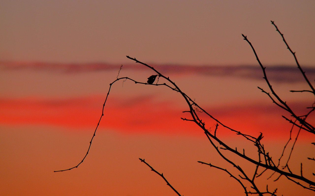 Another lackluster sunset but, I always find something interesting. I like the curly tendrils silhouetted against the colorful sky. Happy Monday!!