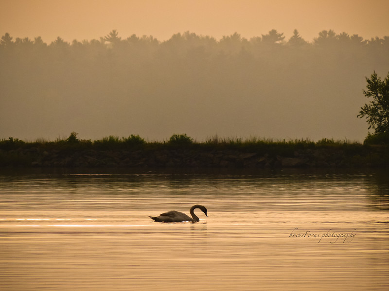 Another sunrise on Little Quittacus Pond<br /> Lakeville, Ma