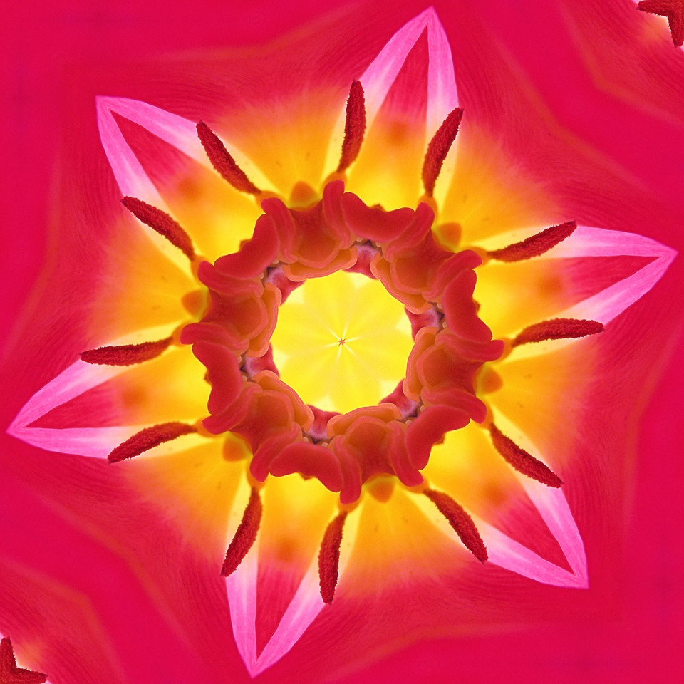 "Another mandala. The original image is the inside of a tulip. I love creating these. It's the ultimate fun in playing with light, texture, symmetry and color. No two ever come out the same. Some look like an alien land. Some look like colored crystals. This one looks seductive and alive. I'll add, to my mandala gallery, the series I made from the same original as this one. Here's the link .. <a href=""http://hocusfocusd70.smugmug.com/Mandalas/Mandalas/8829163_ttLZDW#!i=1706971058&k=BfMSzZ4"">http://hocusfocusd70.smugmug.com/Mandalas/Mandalas/8829163_ttLZDW#!i=1706971058&k=BfMSzZ4</a><br /> I'm still housesitting and am I'm really starting to miss my Mac. I've forgotten what a nuisance a PC can be. It's snowing today and will continue right through tonight!  I love that I can hear the fog horns in Plymouth harbor from here. The snow should make tomorrow's sunrise shoot very pretty. Happy week end!"