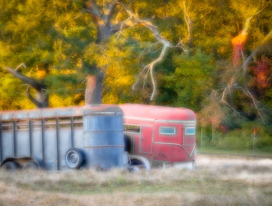 It's my favorite time of year! I love all the early splashes of color. Sheepdog Junction MIddleboro, Ma