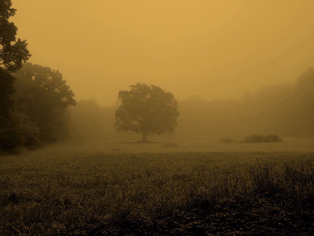 Foggy Dawn....<br /> This lone field on Neck Road, as boring as it looks, always offers up something.