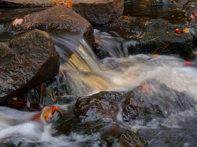 A little piece of autumn in the woods. Webhannet River, Maine
