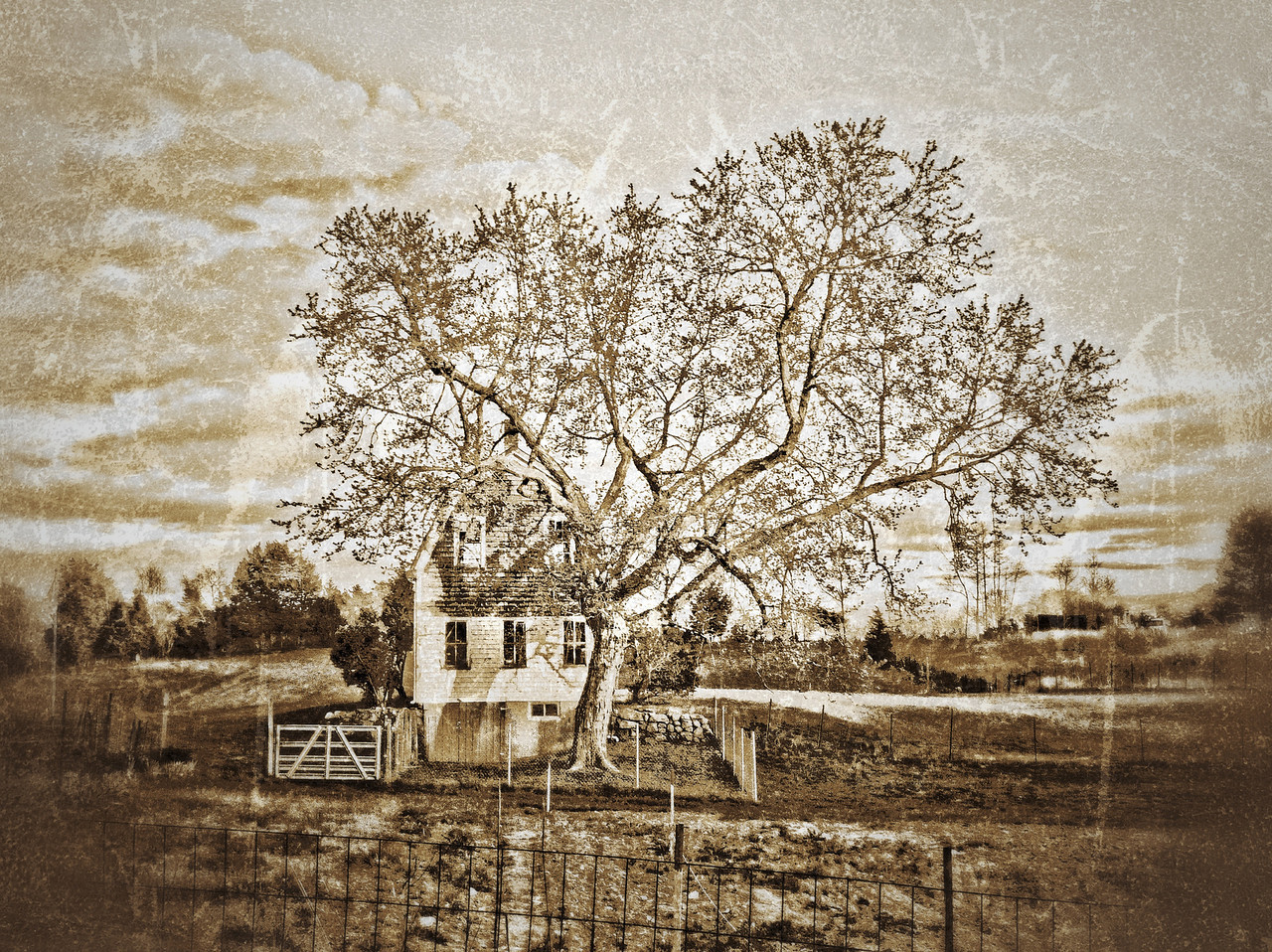 Plymouth Street<br /> Middleboro, Ma<br /> I thought I'd try a texture on the barn and tree combo that I love. After I shot this,  I met the man who owns the barn. He was very nice, although he was a bit curious (skeptical would probably be more accurate) why I was pulled over to the side of the road and taking pictures of his property. I would be too. The property is very well utilized as a small farm and I was invited to come back and shoot the goings-on. I'm very excited about that.<br /> <br /> On another topic...I know a few of you have tried the new picmonkey site with wonderful results. I had never utilized picnik before so I'm not familiar with it's usage and interface. I had some trouble getting my pics to upload and finally got over that hurdle. When I was eventually able to work one (which I LOVE, by the way)  saving it was a bit strange. I can only view it by going online? How does one go about uploading it to smug or putting it on my own hard drive? File format change?<br /> Update~  This is what I love about this community! There is always a willingness to help. I had no idea that I could edit a pic through smug on picmonkey or even picnik, for that matter.