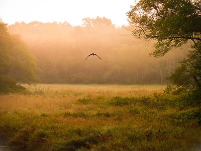 Nemasket River at dawn