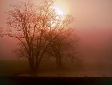 The fog has been great the last week or so. These cold nights and warm days make it hard to stay in bed in the morning!