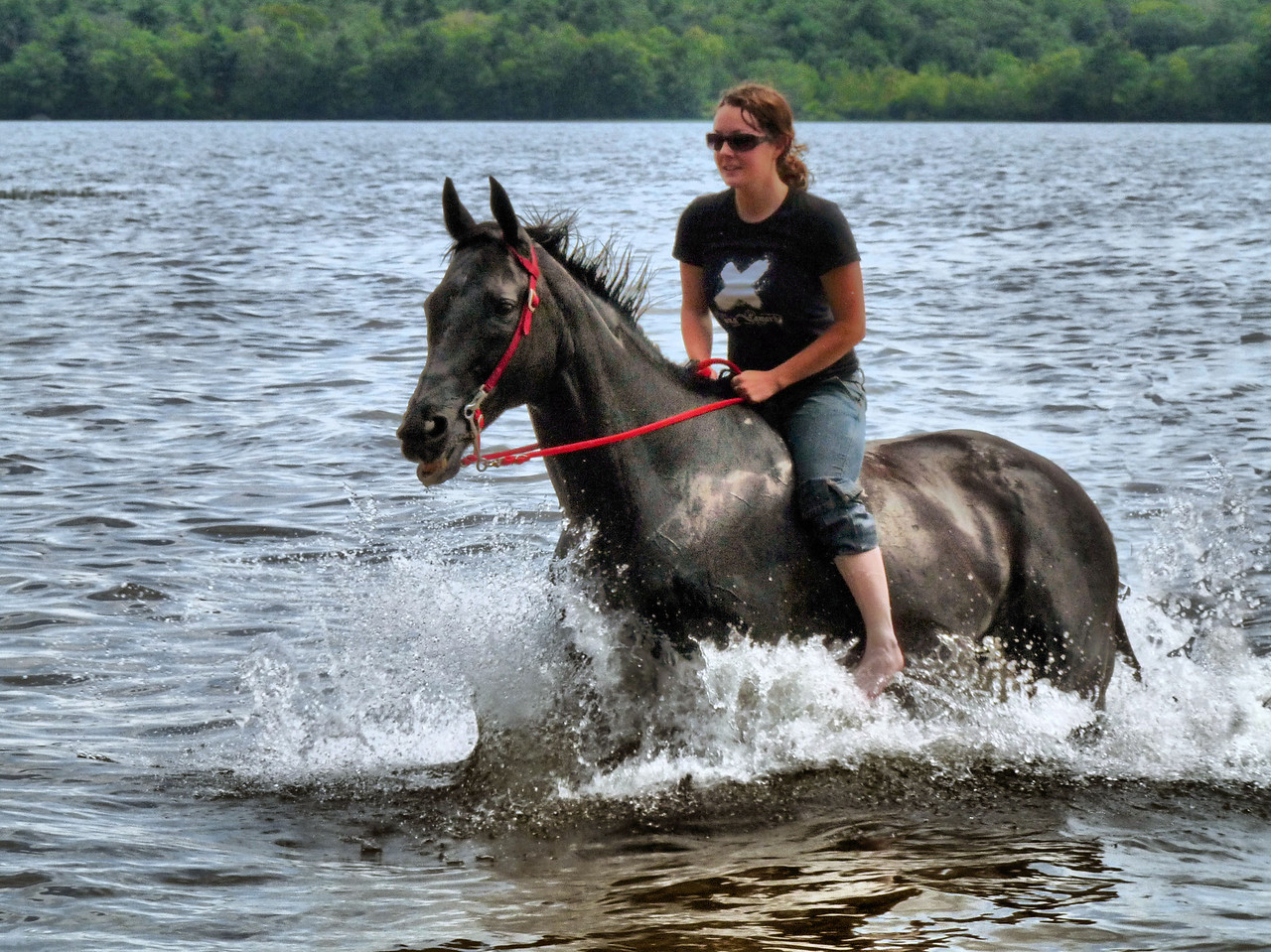 "July 24, 2009<br /> I'm not real happy with the final outcome of this photo. I'm at a real loss here. I know it can be better as it looks pretty washed out. The conditions were harsh- high sun, wet, black horse, white water trying to be blue!.... In trying to bring out some definition to the horse, the shot took on a rather pixelated look. It's not cropped. I'm just going to walk away from it for a bit and get back to my vacation pictures-all 1100 of them! I thought I'd spare you all a weeks worth of dailies and just put up a gallery instead. So, I'm back, with all my random shooting habits!<br /> This photo was taken at Assawompsett Pond. There was a man in this photo too but, I'm proud to say in that PP way, I got rid of him! This gal had taken the trails down to this remote area where we arrived by our little boat. First she had to ""undress"" the horse. What a process!  They kept going into the water, standing there for a few minutes and then running out. It was fun to watch. Then she gave Emma a ride after she got Miss Princess all dolled up again. I love unplanned treats like that!<br /> It's nice to be home!<br /> As a side note to what some of you might be wondering...the man was originally to the far right, just behind the rump and the back splash area. I had to ""put the splash back"" after I made him disappear into blue water!  And yes, I'm sort of proud of myself for spending that much time learning something new and getting it right. <br /> ~~Two months later.....I have now figured out why I was having such a hard time working with this shot. When I was shooting this series of shots, I was shooting in burst mode. Well, unbeknownst to me, burst mode doesn't utilize the full 10 MP, just 3 MP. So, I was working with a really low quality picture to start with. Now I know...and so do you."