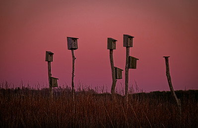 Sandwich Beach Marsh No stellar sunset last night so I just had fun with the low light and rich sky color.  Happy VD!