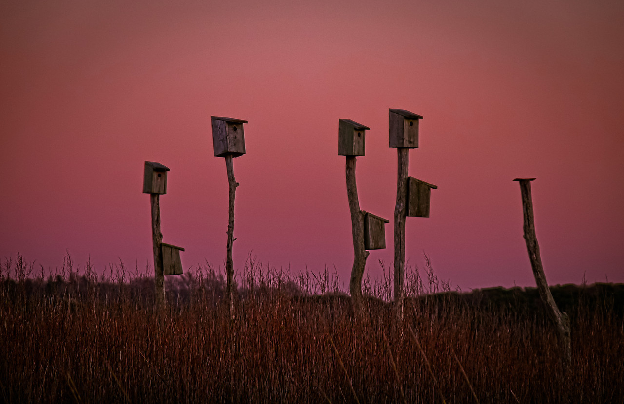 Sandwich Beach Marsh<br /> No stellar sunset last night so I just had fun with the low light and rich sky color.  Happy VD!