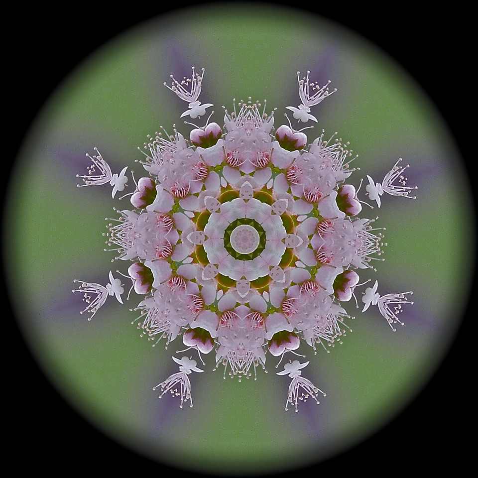 "Swamp Flower Mandala<br /> I was housebound yesterday. I never even shot off one picture and it was beautiful out!   Oh well, I was able to create some mandalas instead, which I haven't done in quite some time. This is the original.. <a href=""http://hocusfocusd70.smugmug.com/Other/Dailies/7669174_PkBp2Z#!i=935562902&k=TzmeU"">http://hocusfocusd70.smugmug.com/Other/Dailies/7669174_PkBp2Z#!i=935562902&k=TzmeU</a>"
