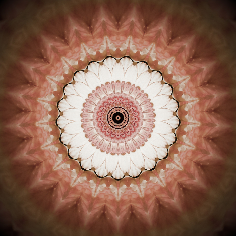 I haven't made a mandala in quite a while so last night, I took a little study break and whipped up a few. Here's my favorite of the bunch. This image was created from a gerbera daisy.
