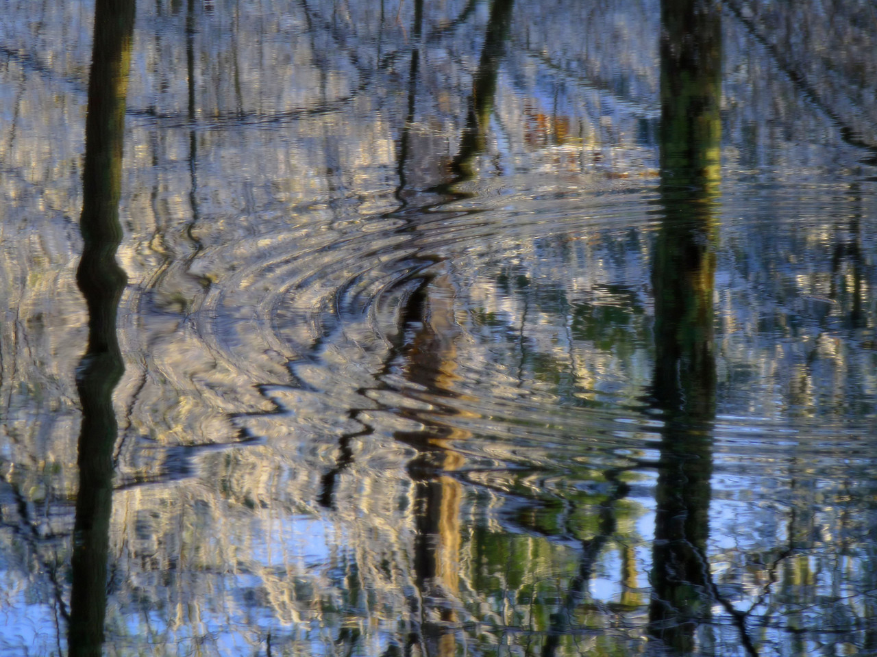 The quest for color continues....<br /> I found this colorful little reflective swamp with snow still on the trees. This is a shot of just the water, with my favorite thing to photograph~ripples!<br /> I want to thank all of you who have been so generous with your time and comments lately. I guess I'm doing something right as so many of you seem to really dig what I put up here.  Have a great day!!