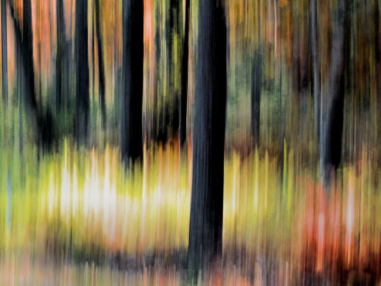 The edge of the woods at sunset. This is a single exposure with the blur effect achieved by flipping the camera up. Then brought into editing for slight color saturation.<br /> We got some snow last night! I'm heading out for sunrise snow pictures! Hope you're all having a great week end!