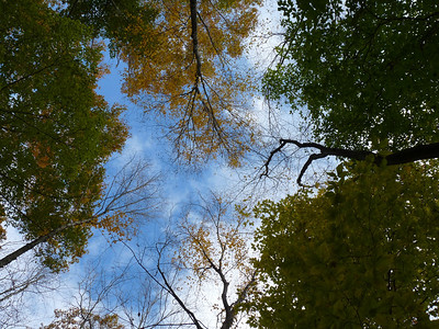 Most times, we are so busy looking all around us for that interesting shot, that we forget to look up. This particular day was very windy and I kept being drawn to look up as the trees were swirling around and cracking. Where else do you gallery a photo like this?