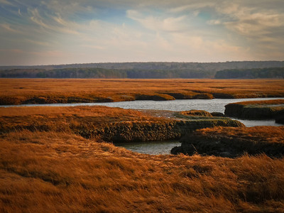 Sandwich marsh lands leading to the ocean.