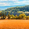 "Oct 24 - Golden Fields and Mountain Views<br /> <br /> This is a 4 image pano ""stitch"".  I am posting later than I normally do.  Thank you for your comments on the barn image I posted yesterday!  I wasn't able to comment and am not sure I will be able to today!  I apologize."
