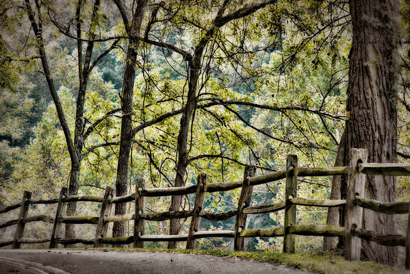 Oct 9 - Fence Line along a Country Road<br /> <br /> Thank you for all your nice comments on the barn image I posted yesterday!  This image was taken along the road by that barn.