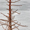 Feb 14 - Sticks on a Stick - Osprey nest