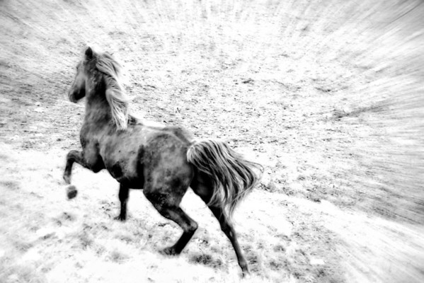 """Nov 20 - """"Tuck"""" in Motion<br /> <br /> I captured my horse  while running through the field.  He's a little on the dirty side but not kept in a stable, so that is to be expected."""