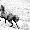 "Nov 20 - ""Tuck"" in Motion<br /> <br /> I captured my horse  while running through the field.  He's a little on the dirty side but not kept in a stable, so that is to be expected."