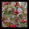 Nov 4 - Fall Dog Wood Berries