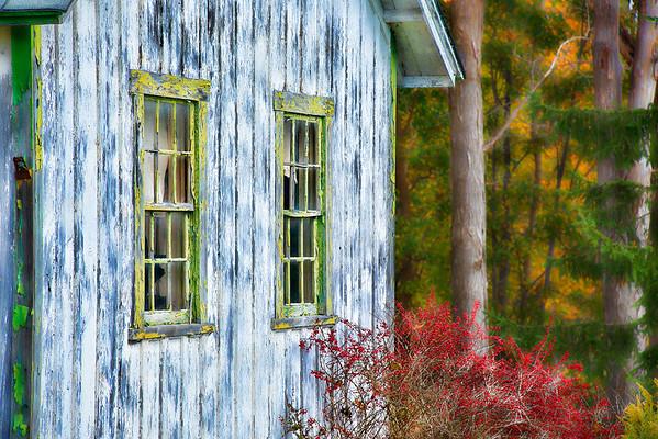 Nov 13 - Peeling Paint and a Dying Bush